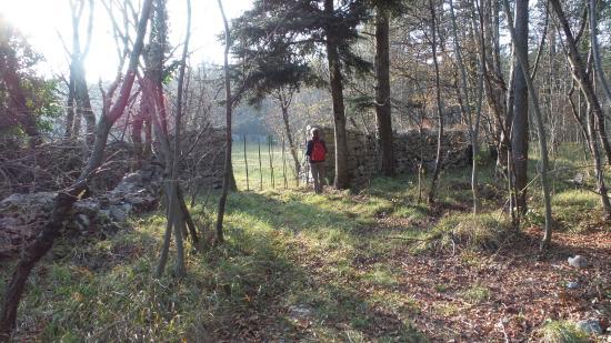 Basovizza, İtalya: Foto 5 = dopo 50 m difronte a cancello chiuso