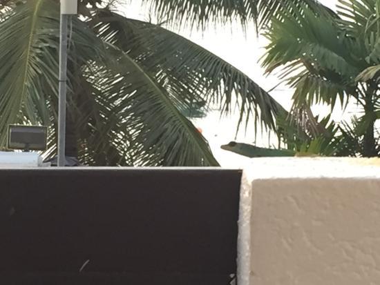 Tropical Sunset Beach Apartment Hotel: photo0.jpg