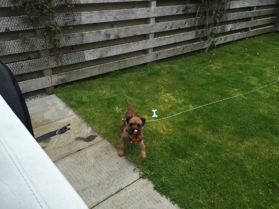 North Kessock, UK: Alfie enjoying the garden