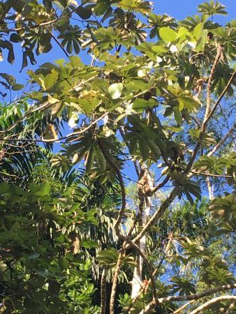 Artola, Costa Rica: sloth monkey