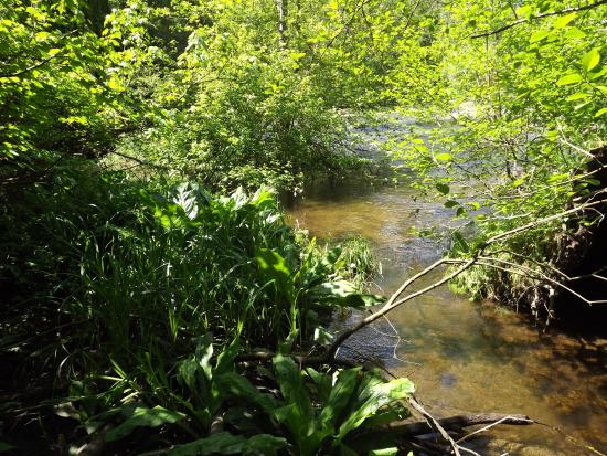 Courtenay, Kanada: Puntledge Park with walking trail