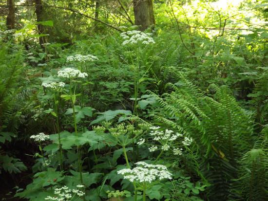 Courtenay, كندا: Native Plants flourish in Puntledge Park