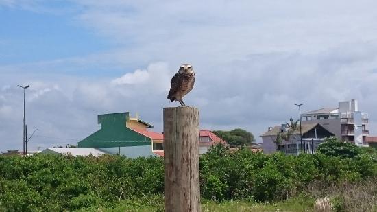 Pontal do Parana, PR: Coruja na praia