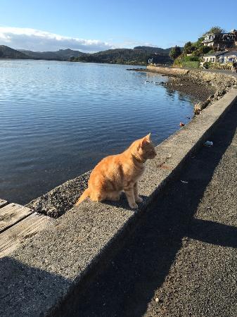 Mangonui, Nueva Zelanda: Ginge, the town cat!
