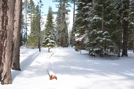 South Lake Tahoe, Californien: Grounds