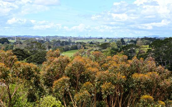 Kumeu, Новая Зеландия: View from room