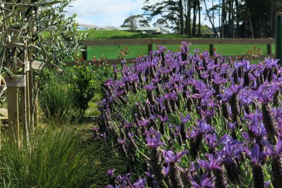 Kumeu, New Zealand: Garden