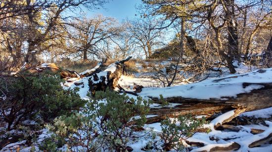 Mount Laguna, CA: Snowy mountain