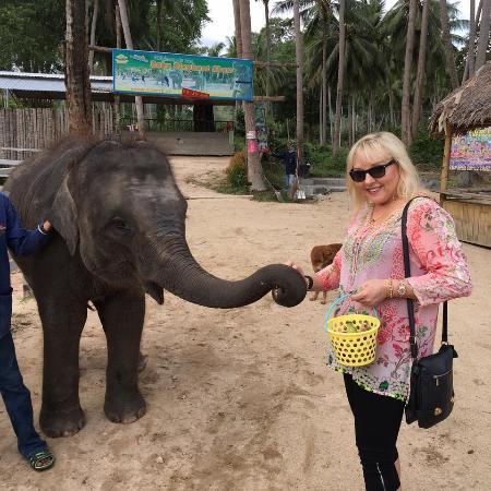 Bophut, Tailândia: Feeding one of the baby elephants