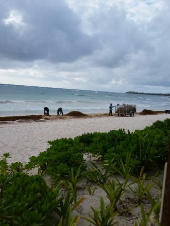 Akumal Bay Beach & Wellness Resort: Beach area in the mornings. Cleaning the sea weed