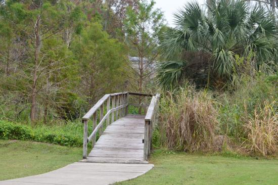 Casselberry, FL: trail through wetland