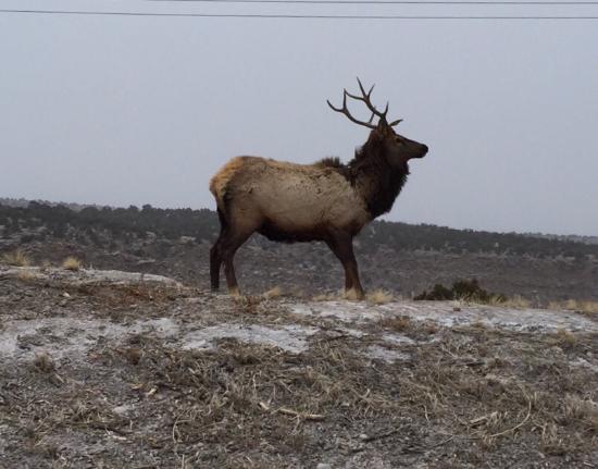 Los Alamos, NM: photo3.jpg