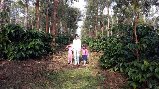 Sakleshpur, Indien: The coffee estate