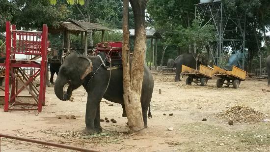 Tha Tum, Tailândia: 20160108_131117_large.jpg
