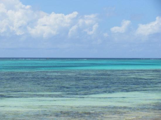 Karafuu Beach Resort and Spa: Sea