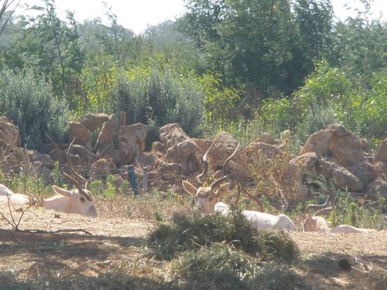 Zoo picture of jardin zoologique national de rabat for Jardin zoologique