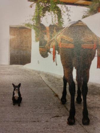 Jubrique, İspanya: Mesón La Pozuela
