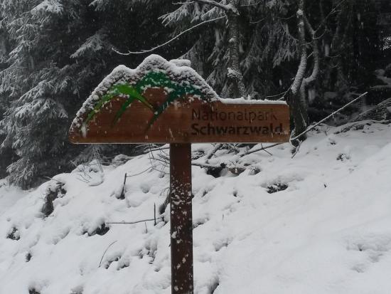 Seebach, Alemania: Nationalpark Schwarzwald