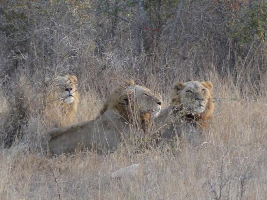 Kruger National Park 사진