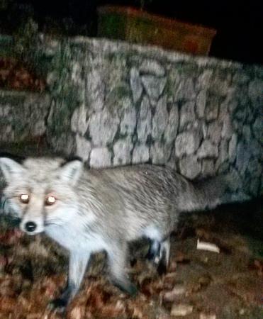 Ostello della Gioventu Refugio Piero Merlino : La simpatica volpe