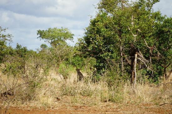 Kruger National Park: DSC01476_large.jpg