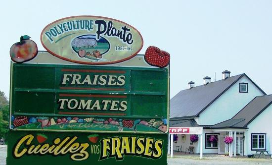 Sainte-Petronille, แคนาดา: Polyculture Plante, fraises en kiosque, tomates..., auto-cueillette, pâtisserie, boulangerie