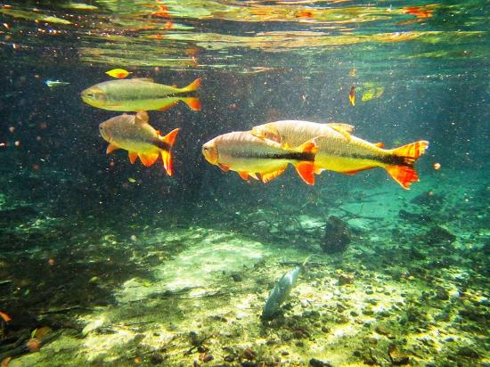 Resultado de imagem para peixinhos
