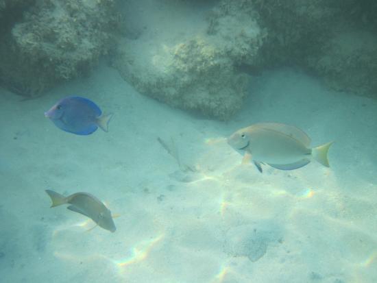 Grand Bahia Principe El Portillo: onder water