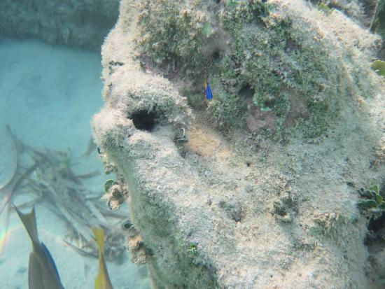 Grand Bahia Principe El Portillo: under water