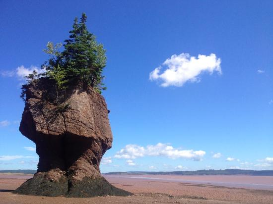 Hopewell Rocks At Low Tide In August