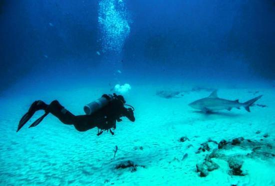 Gran Scuba Diving : Bull Shark