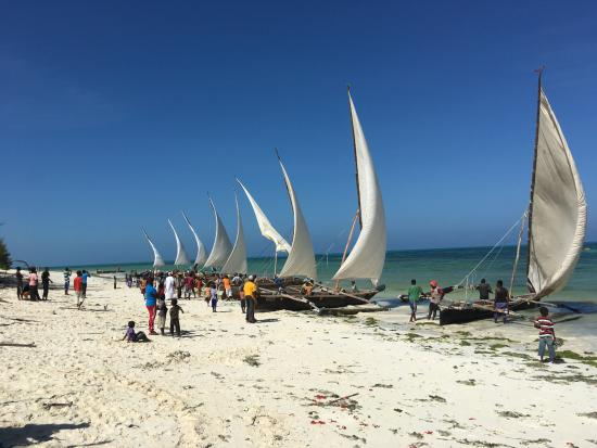 Mamamapambo Boutique Hotel: Fishermen racing sailboats