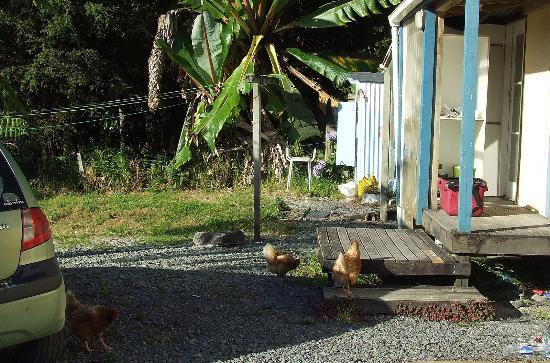 Little Earth Lodge: Free range chicken