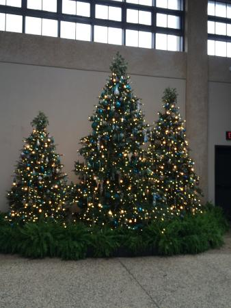 Longwood Gardens Christmas.Longwood Gardens Christmas Trees Next To Wall Of Greenery