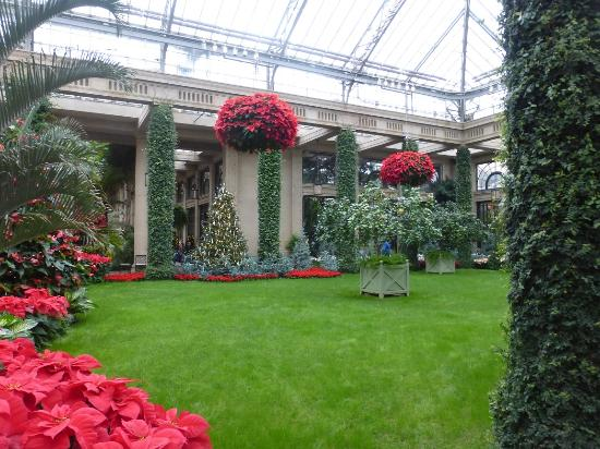 Longwood Gardens Green Grass At Christmas In The Conservatory 2015