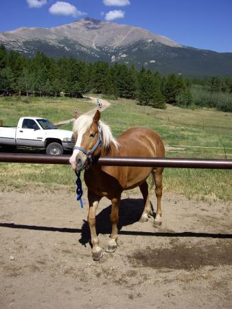 写真Lane Guest Ranch枚