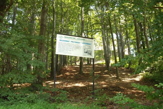 Rezerwat Przyrody Lipowiec
