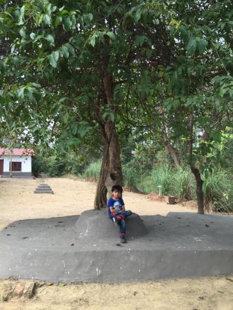 Muba At Mukki, Kanha照片