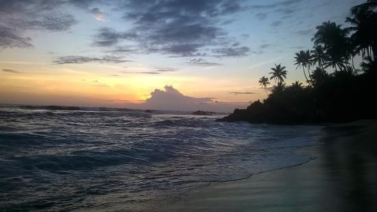 Frangipani Tree: Sunset