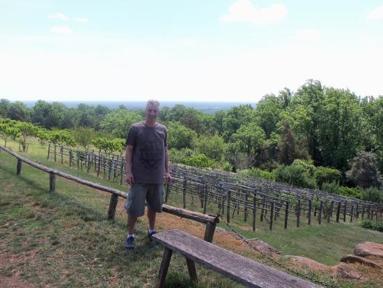 Monticello Tomasza Jeffersona: Monticello vineyard