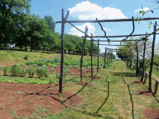 Monticello Tomasza Jeffersona: Monticello veggie garden