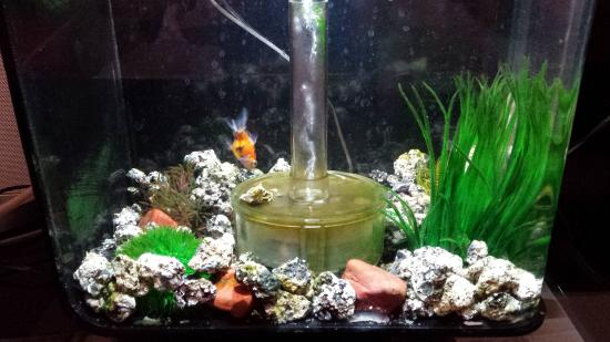 Maximilian Hotel: Our fish tank upon arrival.