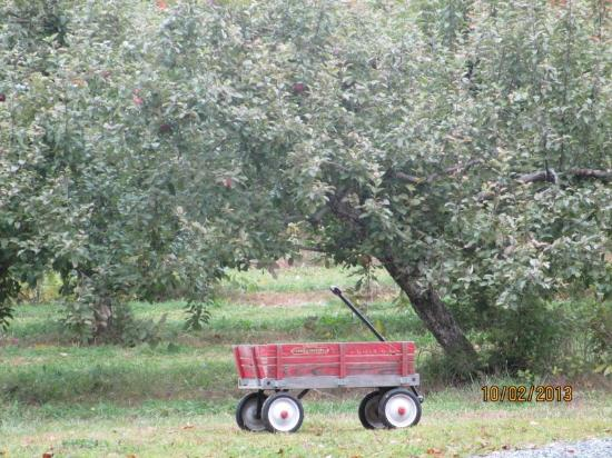 Haverhill, NH: Apple Trees w/Apple Cart