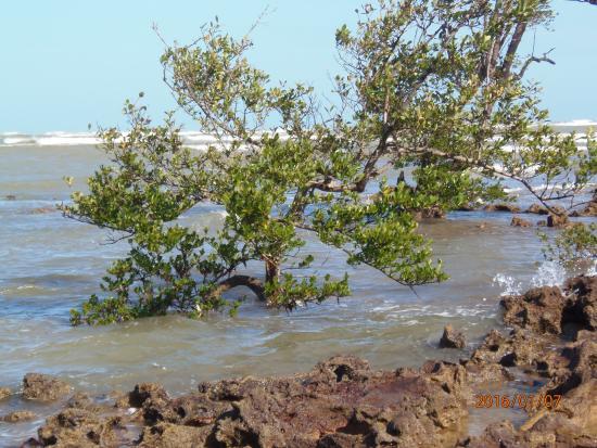 Pousada Terra Mar: Árvores crescendo em meio ao mar agitado!