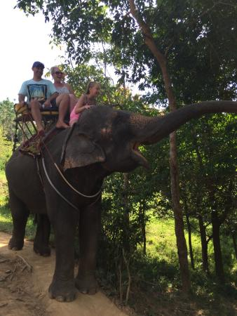 Kok Chang Safari Elephant Trekking: photo1.jpg