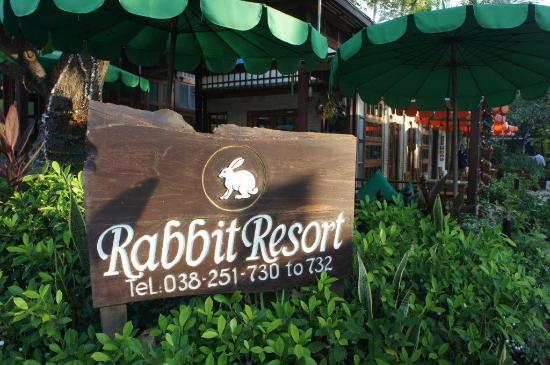 兔子度假村照片