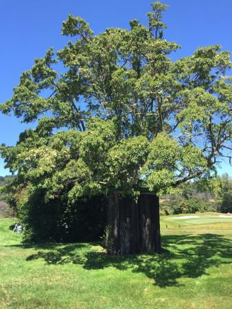 Rotorua Golf Club - Arikikapakapa Course: photo0.jpg