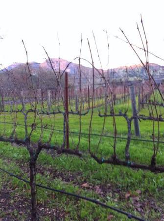 Chateau de Vie: Vineyard Outside Carriage House