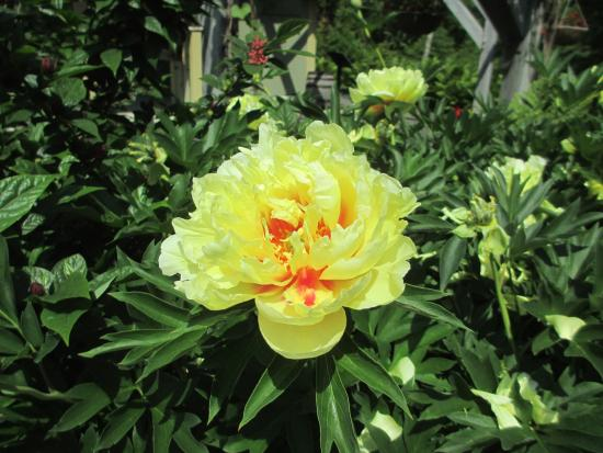 Coastal Maine Botanical Gardens Picture