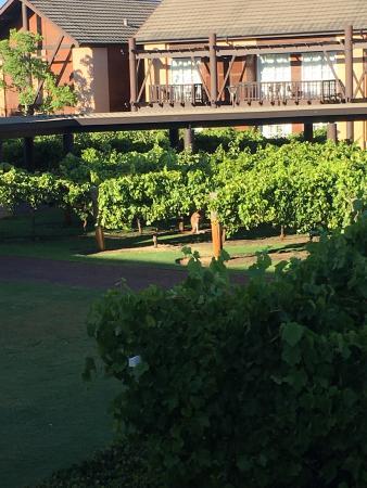Foto de The Vines